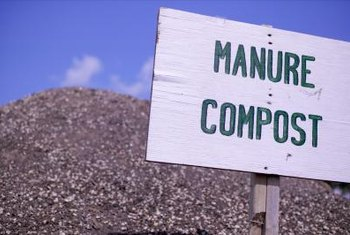 manure in the garden - manure compost