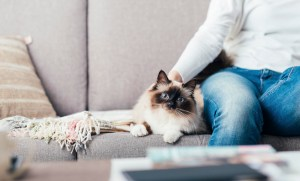 care cats kittens3 1600 - 4 tips to help you bring your cat to the Vet