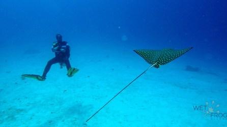 Sebayour Kecil dive spot