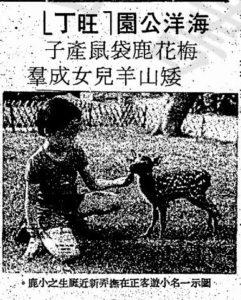 可愛的梅花鹿﹕工商晚報 1977.06.03