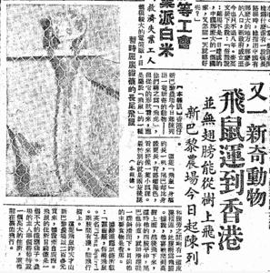 (可愛的飛鼠﹕大公報﹕1957-09-08)
