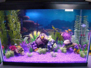20 gallon fish tank decoration ideas 2017 - Fish Tank ...
