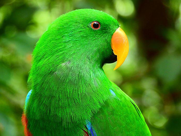 Nikon Coolpix P1000 Digital Camera parrot sample image
