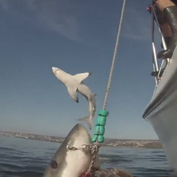 shark-photobomb_24816