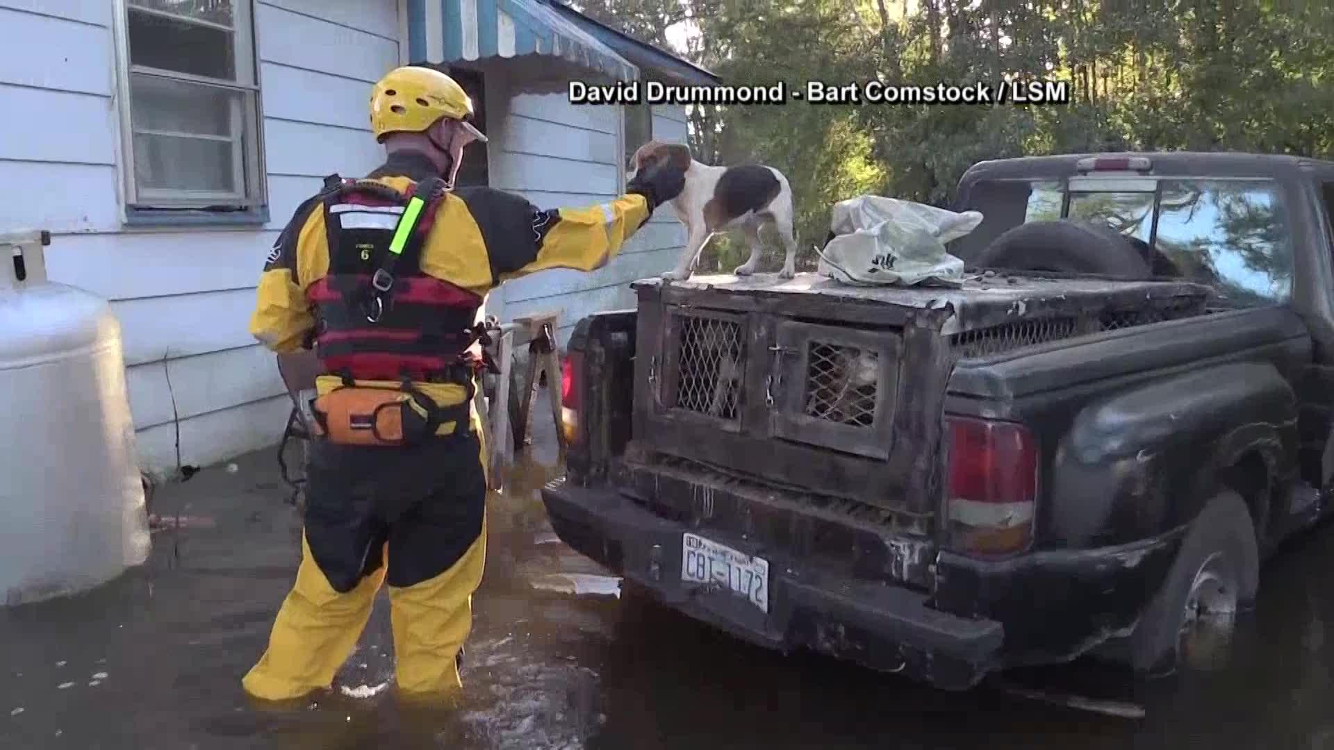 puppy rescue_232968