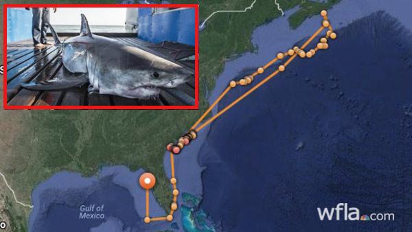 Savannah shark_551792