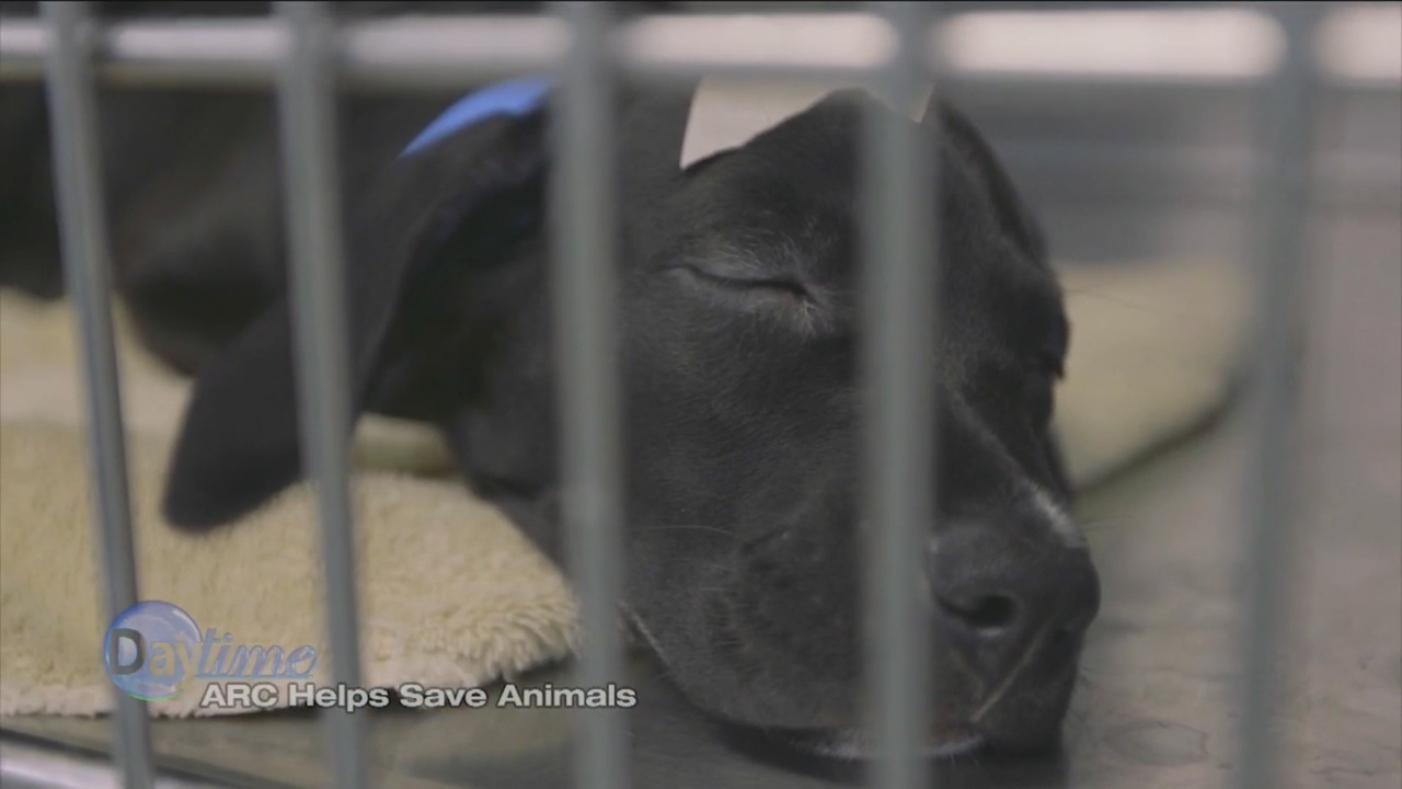 ARC_Helps_Save_the_Animals_1_20180731163037