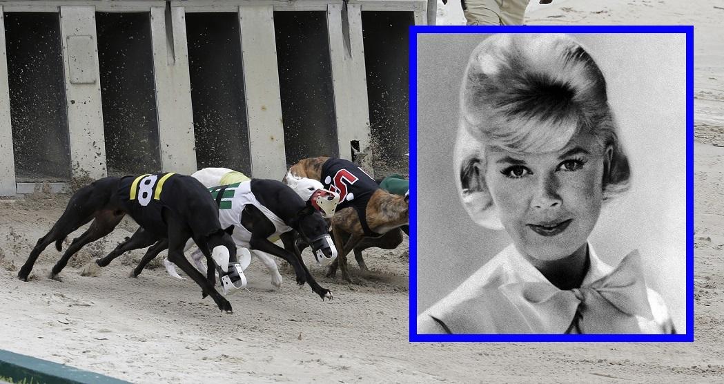 Dog Racings Decline_1532898351723