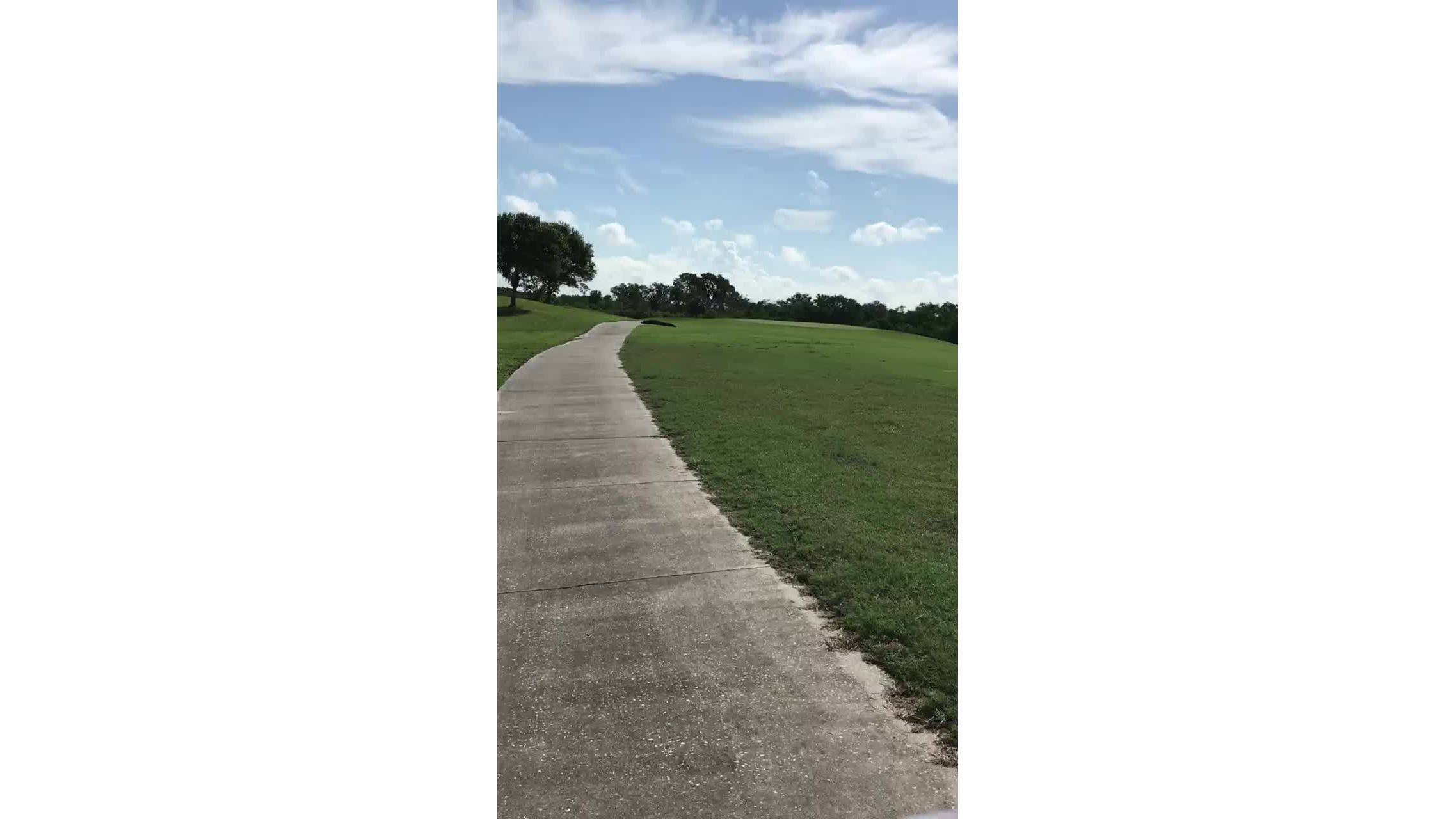 12_foot_gator_spotted_at_MacDill_0_20180831195514