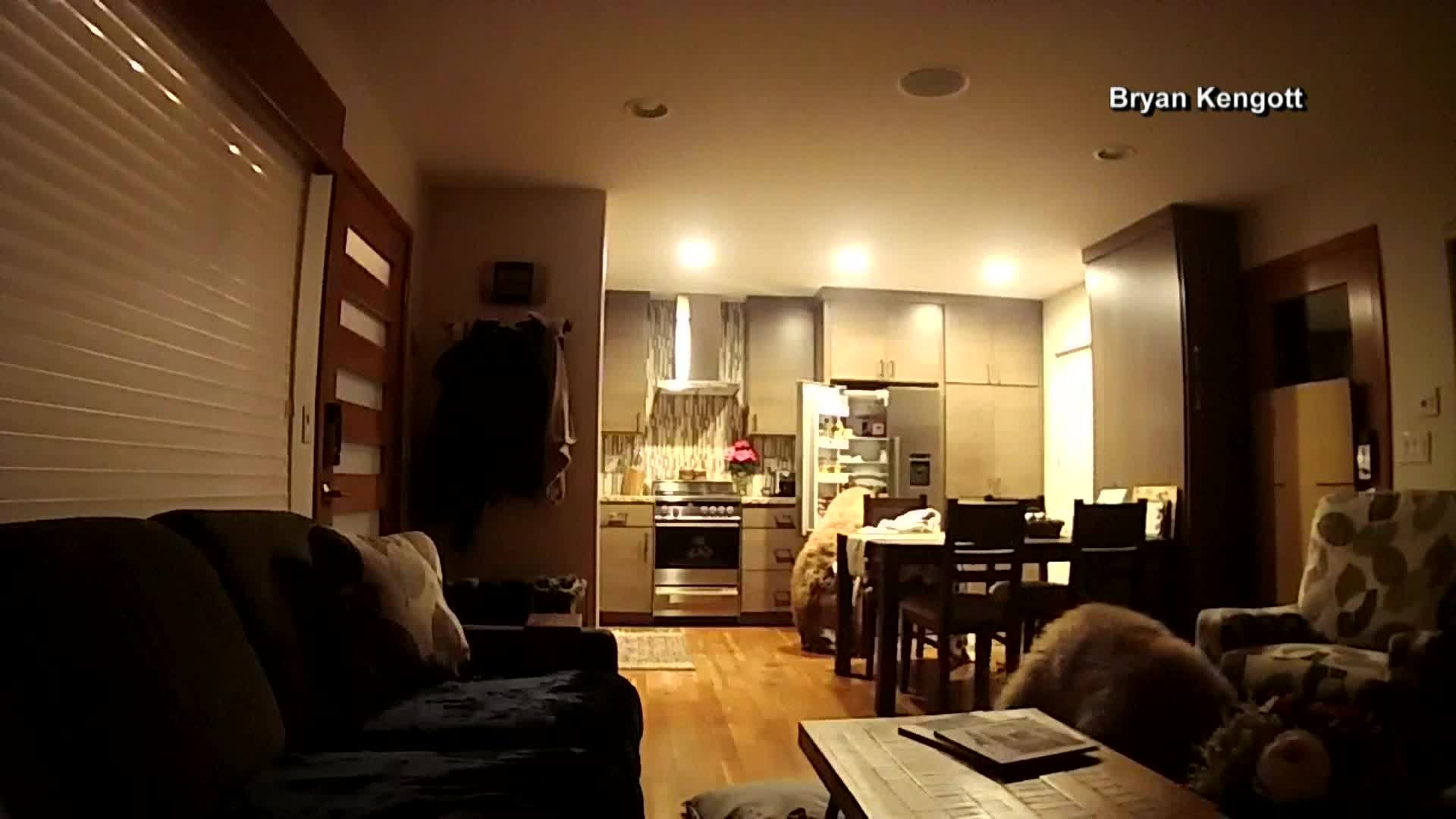 Bears caught on camera looking for bare necessities inside home