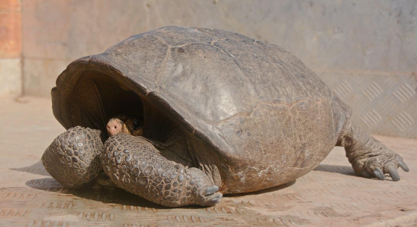 Ecuador Tortoise_1550779683199