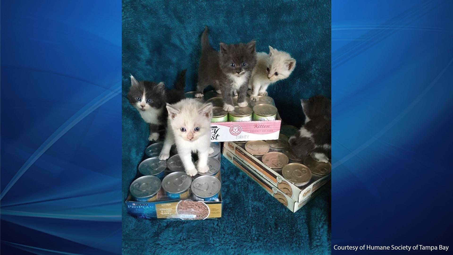 Kittens!_1558470290721.jpg