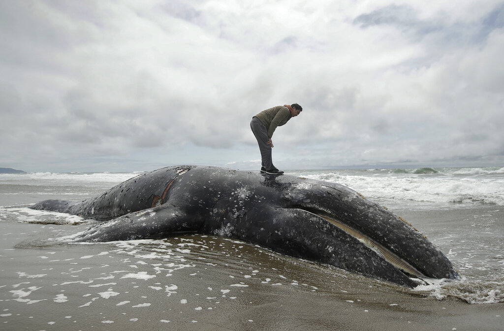 Dead Whales_1560647959151