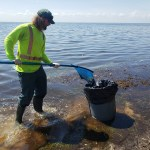 'Wave of dead fish': 9 tons of dead fish collected along St. Pete shores in single day after Elsa 💥😭😭💥
