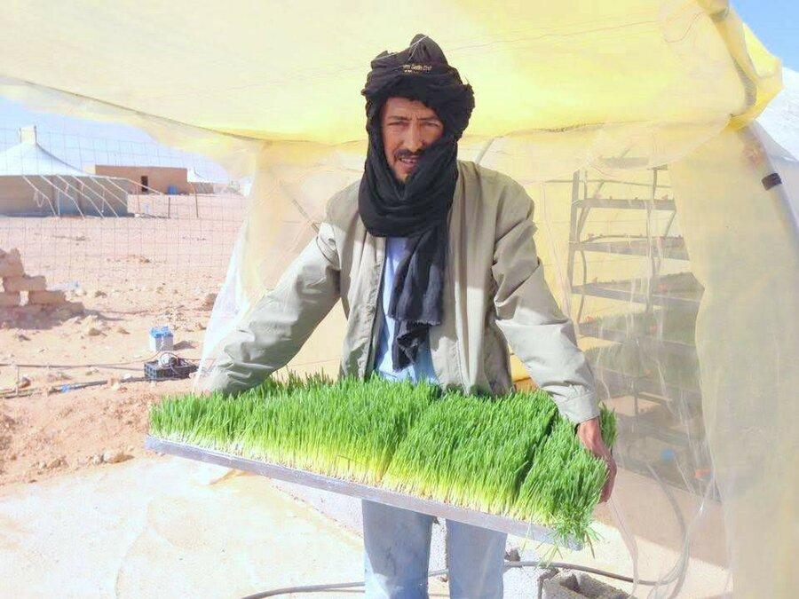 How I Grew Barley In The Desert World Food Programme