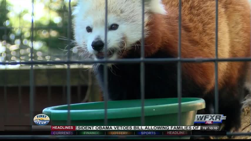 Mill Mountain Zoo loses accreditation_73619070-159532