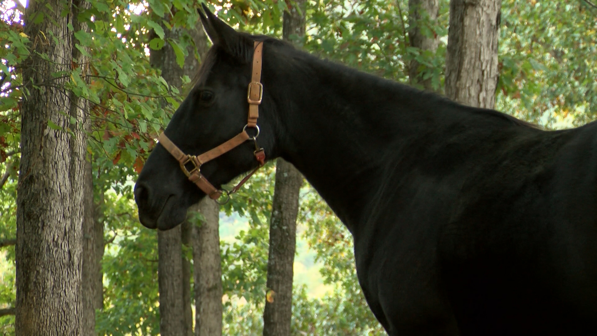 horse rescue baby_1477710924722.jpg
