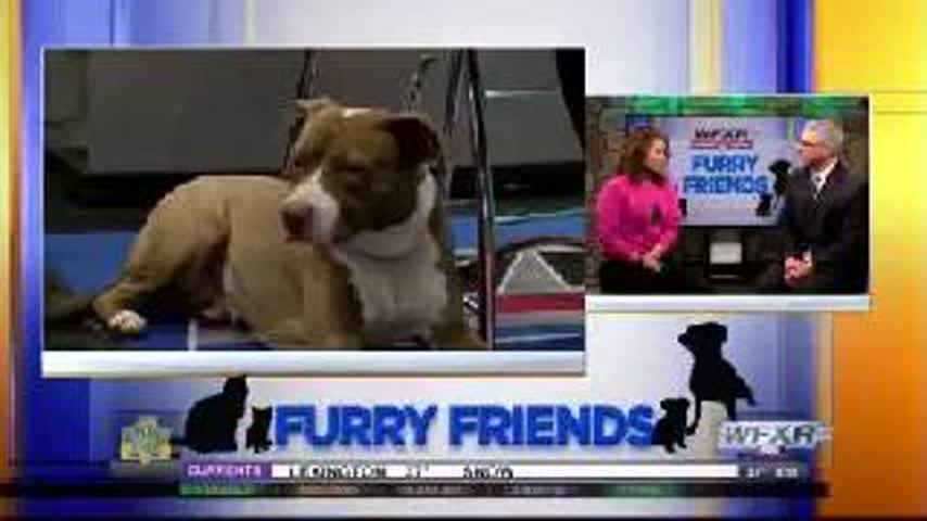 Furry Friends- Dusty needs her forever home_26353062