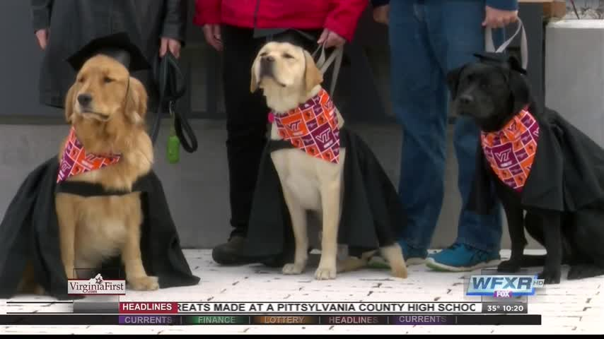 Puppies graduate to move forward in service training_74776503