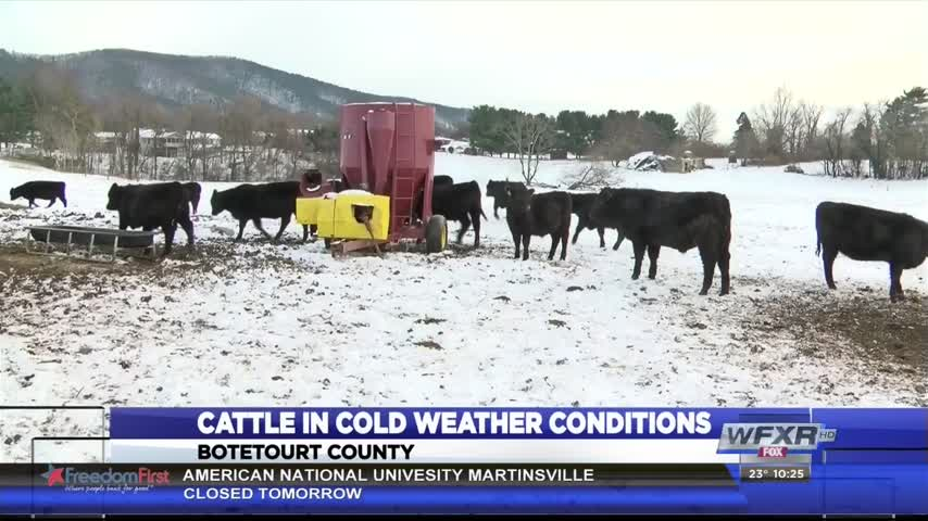 Ag Life- Animals in wInter weather_37934320