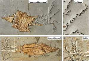 Life & Death in the Jurassic Sea of Dorset by Malcolm Hart for WGCG, Figure3