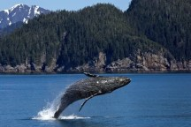 whale watching in Newfoundland