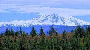 Chuckanut Mountain Marathon & 1/2 Trail Run @ Larrabee State Park | Bellingham | Washington | United States