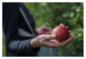 Learn to Grow Organic Fruit at Home @ WCLS Deming Library | Everson | Washington | United States