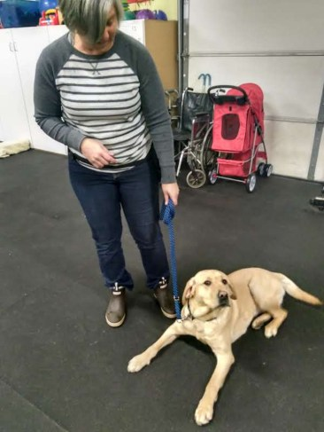 Volunteer, Lisa Sohni, with Buttercup demonstrating one of her basic commands. Photo courtesy: Brigadoon Service Dogs.