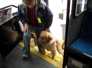 Dogs in training are regularly brought out on the town to practice their skills in situations they may experience later with their future companions. Photo courtesy: Brigadoon Service Dogs.