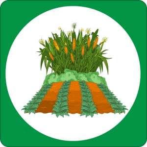 Starting Your Vegetable Garden @ WCLS Blaine Library   Blaine   Washington   United States