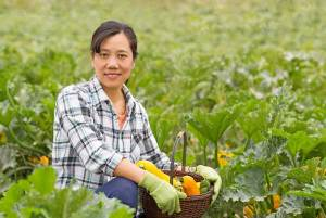 Learn to Grow a Vegetable Garden @ WCLS North Fork Library | Maple Falls | Washington | United States