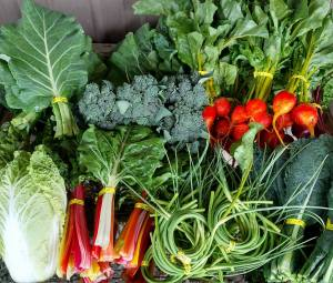 Lynden Farmers Market @ Centennial Park | Lynden | Washington | United States
