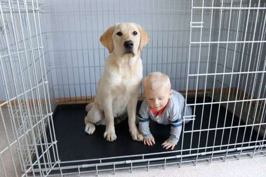 Raising a puppy is fun for the whole family. Photo courtesy: Brigadoon Service Dogs.