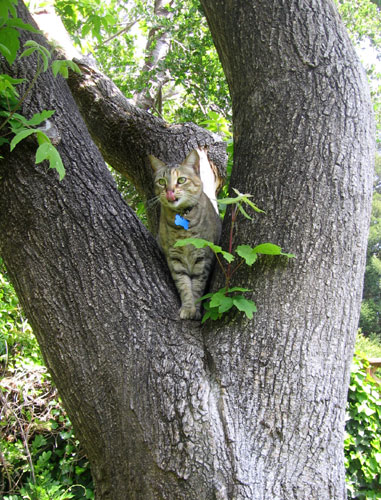 Penny in the tree