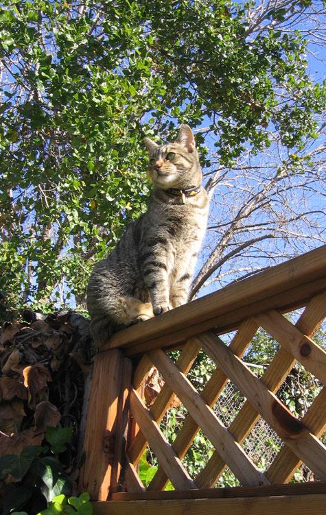 Sparky on the fence