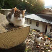 kyoto-day-3-cats-on-the-philosophers-path_4100946929_o