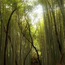 kyoto-day-4-bamboo-grove_4104333140_o