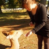 kyoto-day-5-feeding-the-deer_4105759457_o