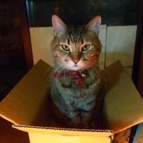 kyoto-day-6-daddy-cat_4109370319_o