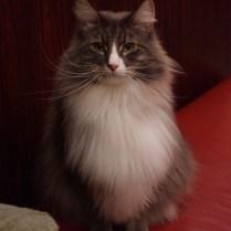 tokyo-day-5-fluffy-kitty_4085496198_o
