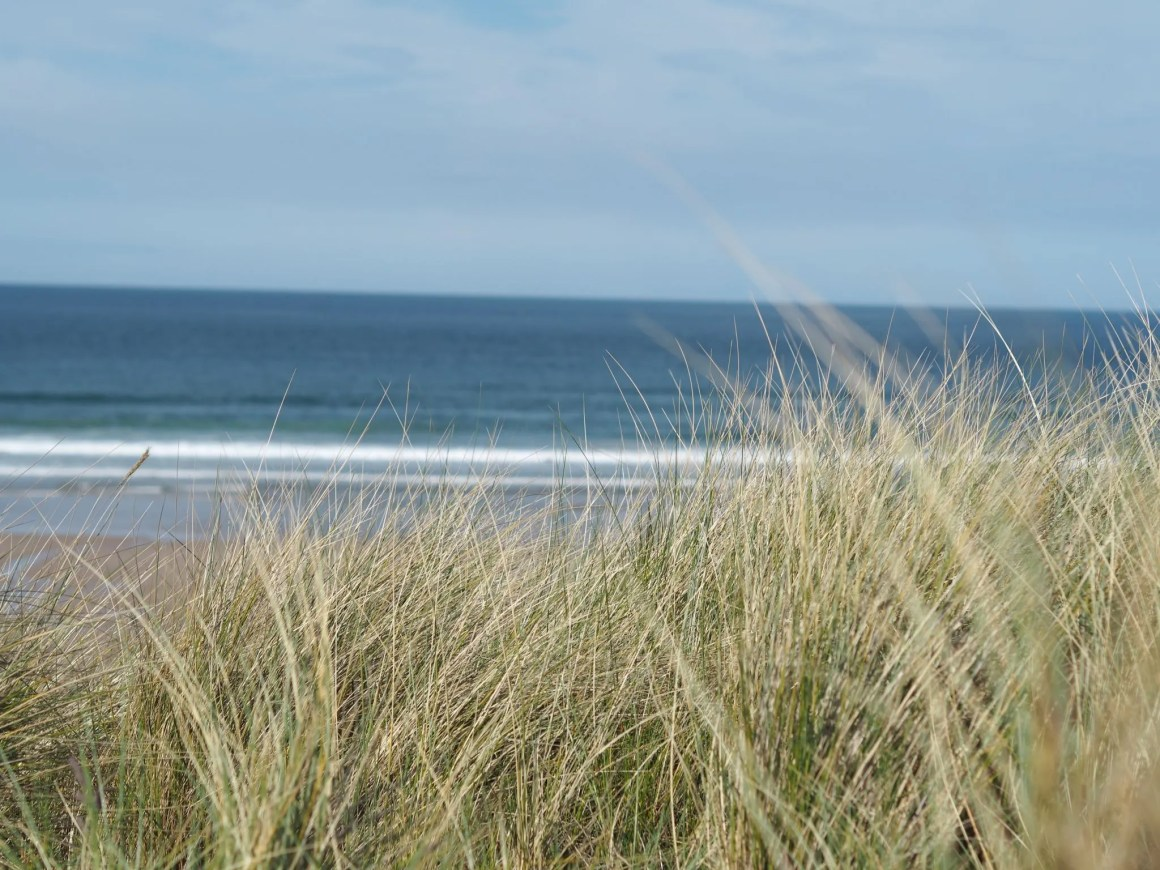 Sand dunes on Bamburgh beach