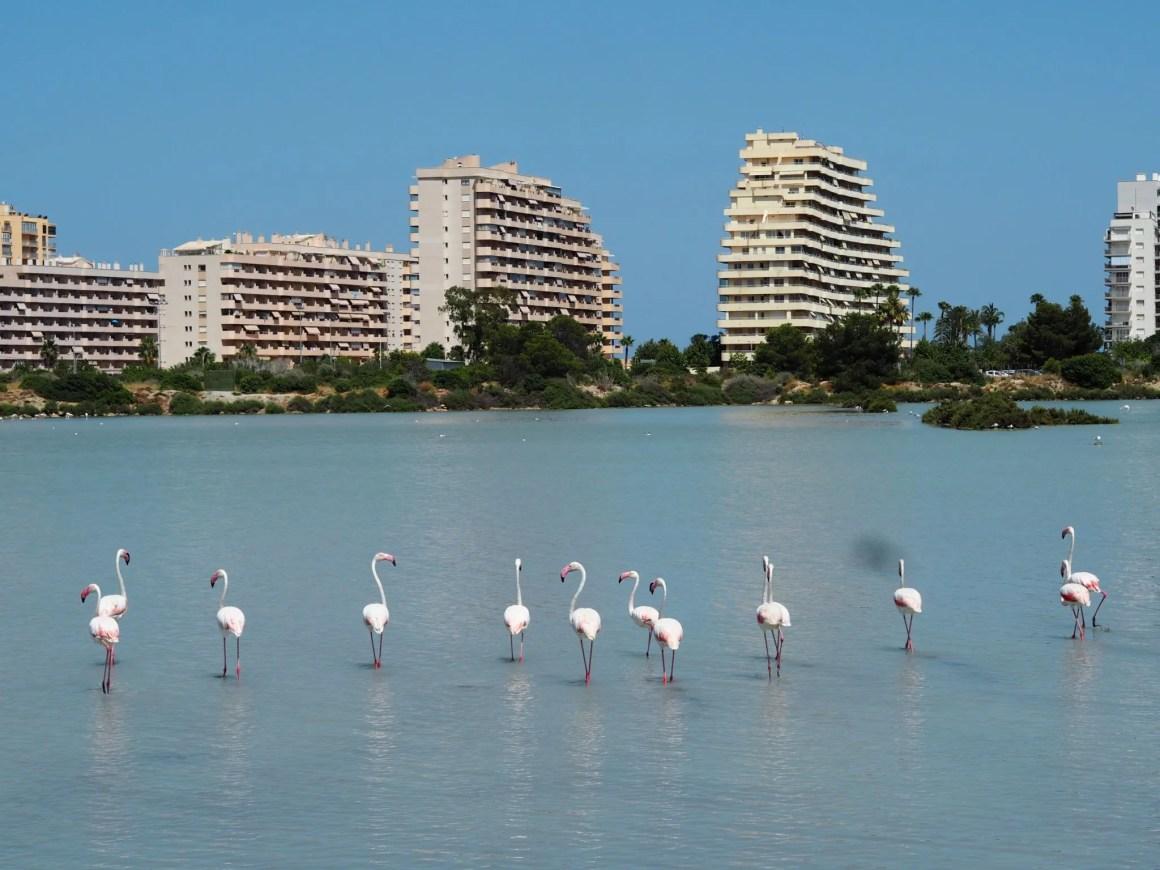 las salinas flamingos calpe