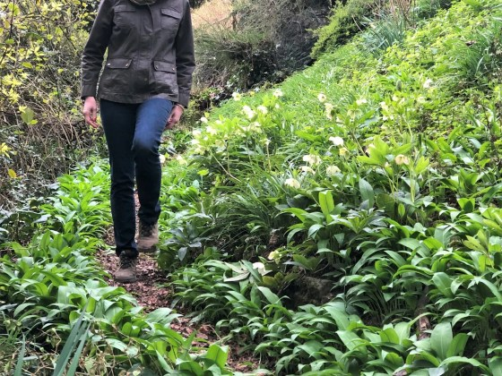 woman walking among wild garlic