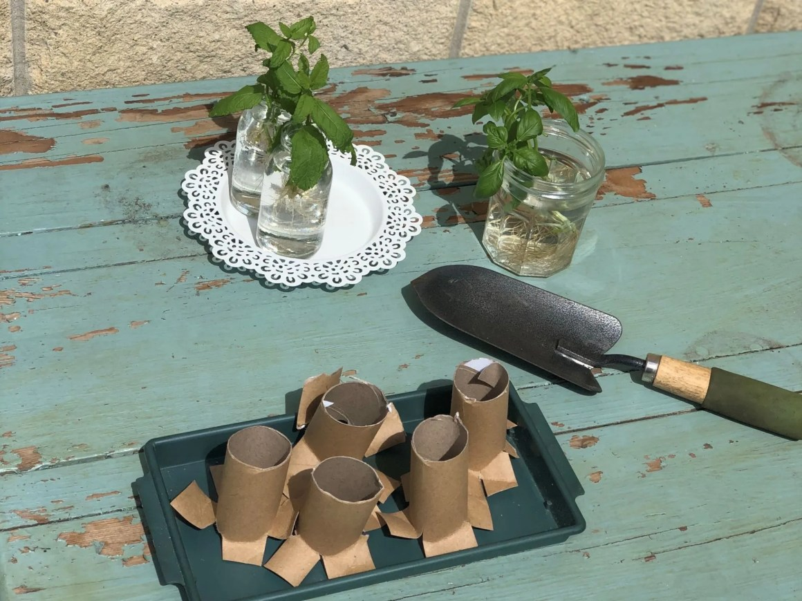 Potting on herb cuttings
