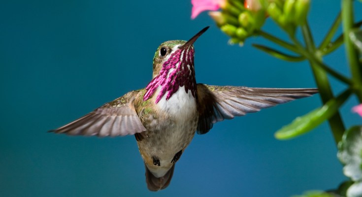 hummingbird meaning