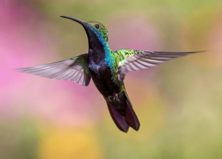 Hummingbird Animal Totem Hummingbird Meaning on Whats-Your-Sign