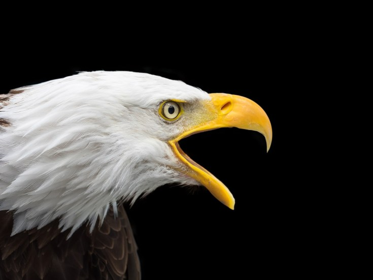 Soaring Into Symbolic Eagle Meaning On Whats Your Sign