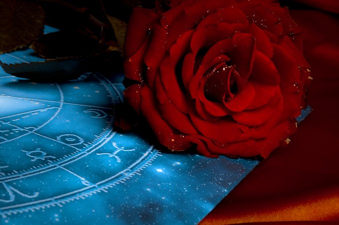 Rose Meaning And Rose Symbolism On Whats Your Sign