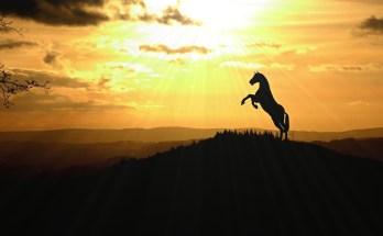 Solar animal symbolism